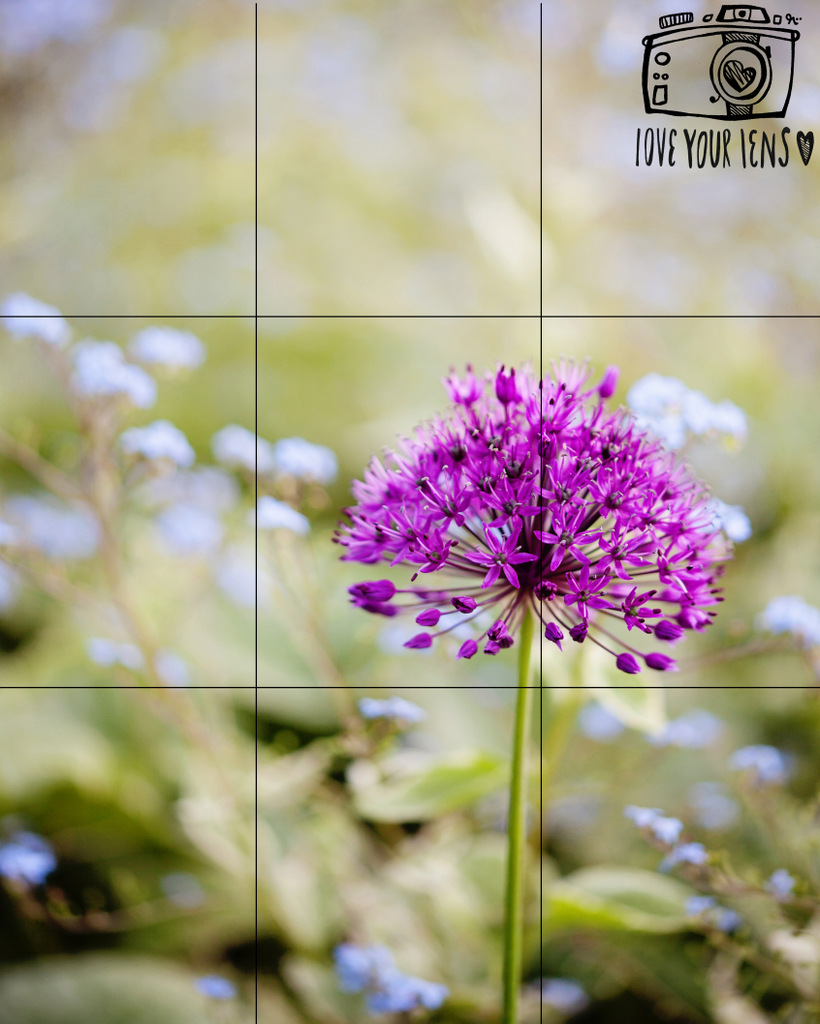 how-to-photograph-flowers