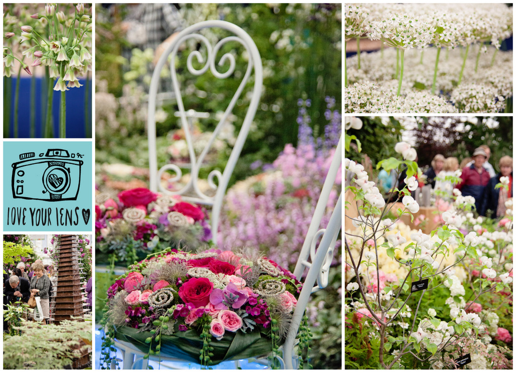Chelsea-Flower-Show-Floral-Displays