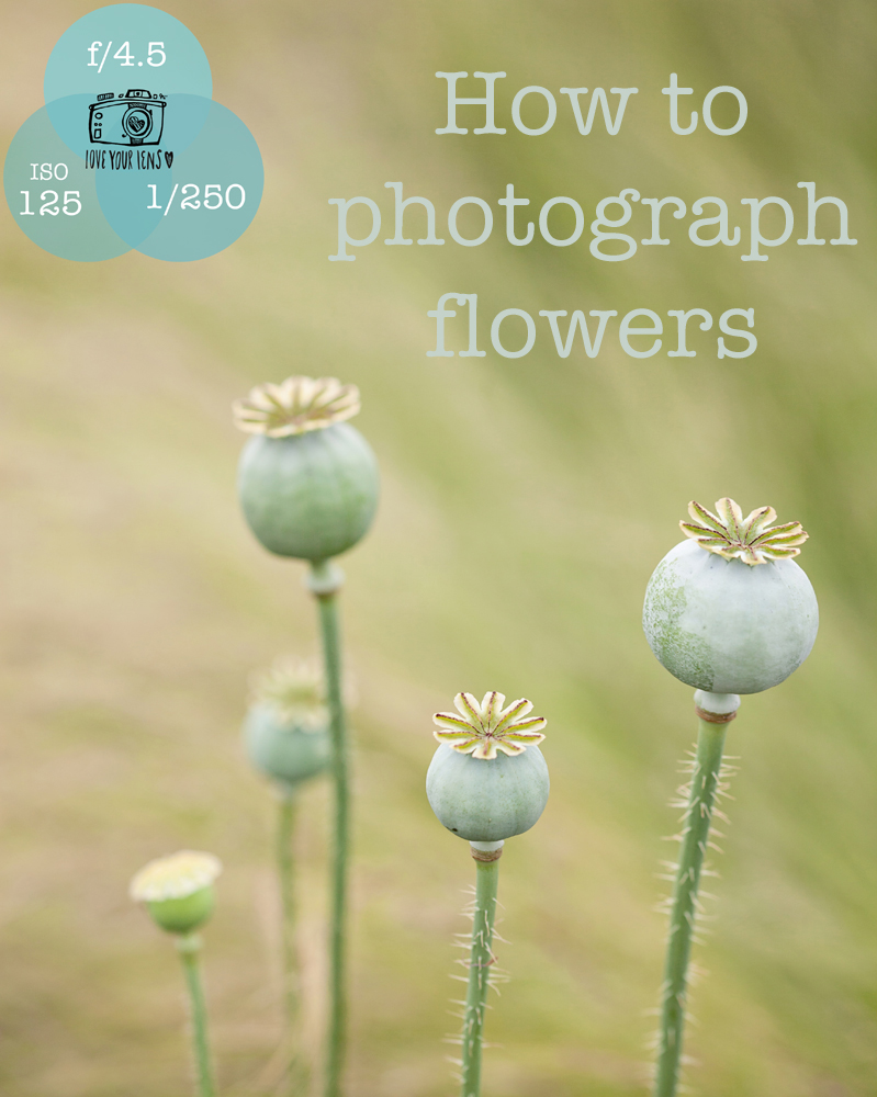 How_to_photograph-flowers
