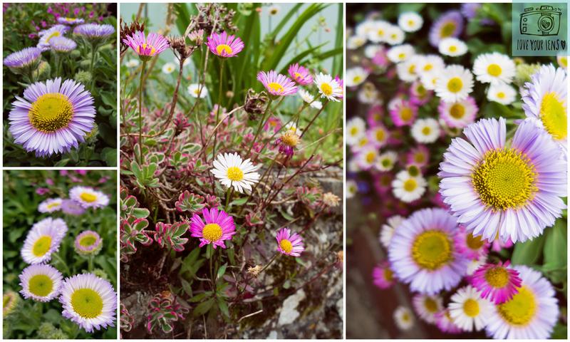 Wild-flowers-Helford-Village