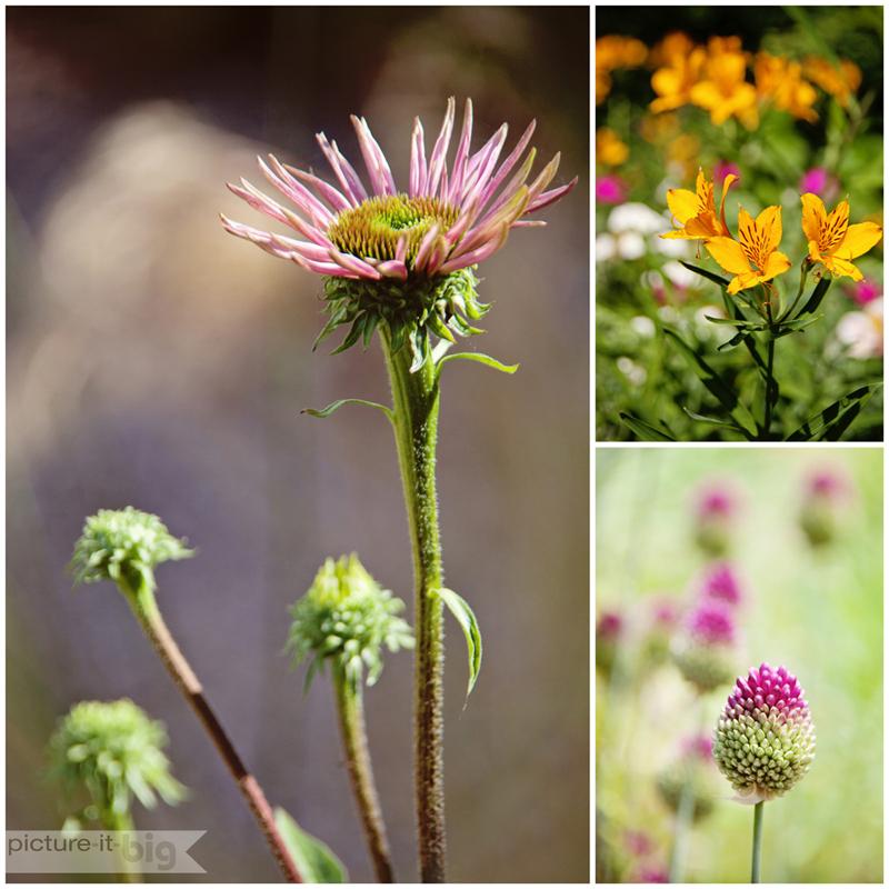 plant-portraits-love-your-lens