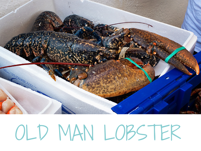 lobster-photo