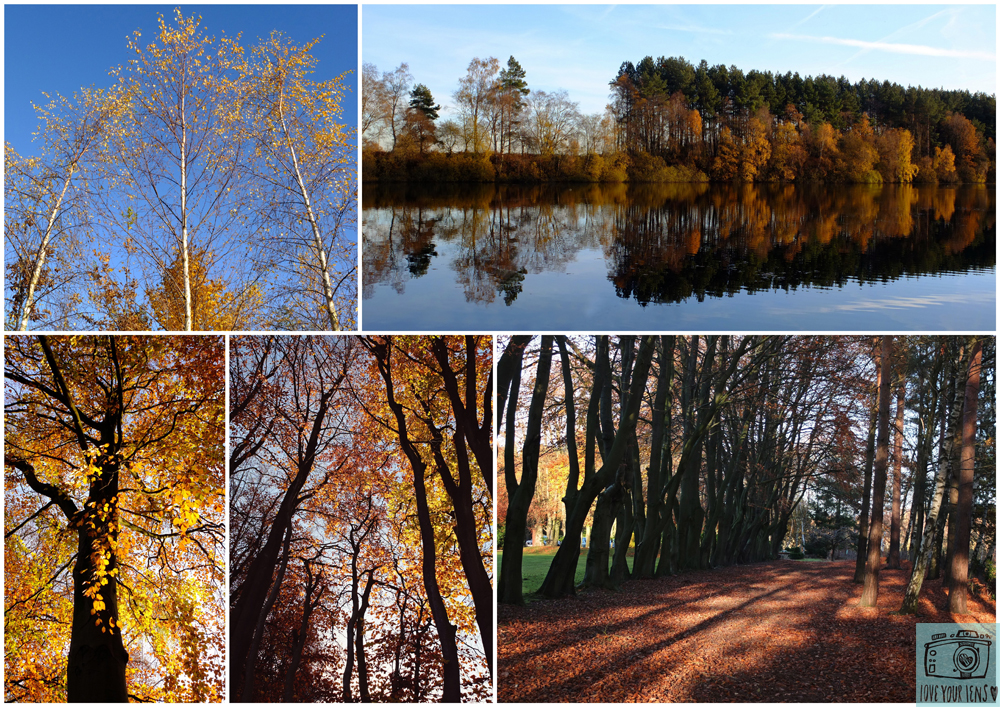 autumn-photography