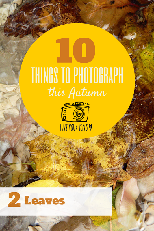 HOW_TO_PHOTOGRAPH_AUTUMN_LEAVES