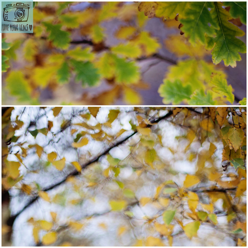 abstract_autumn_leaves