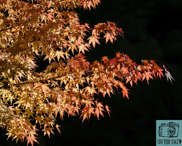 autumn_leaves_love_your_lens