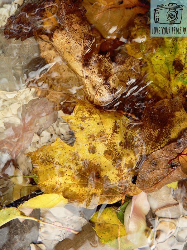 how_to_photograph_autumn_leaves_2
