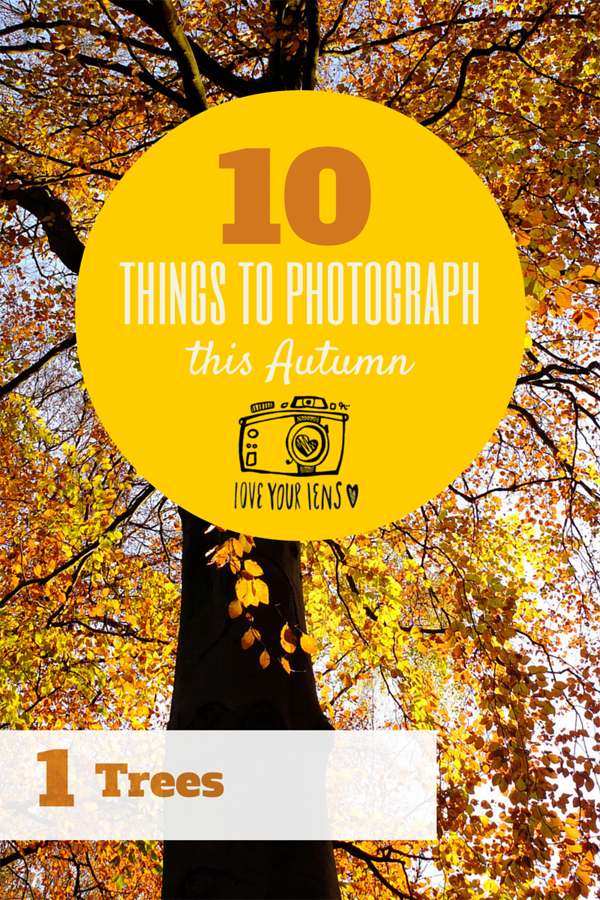how_to_photograph_trees_in_Autumn