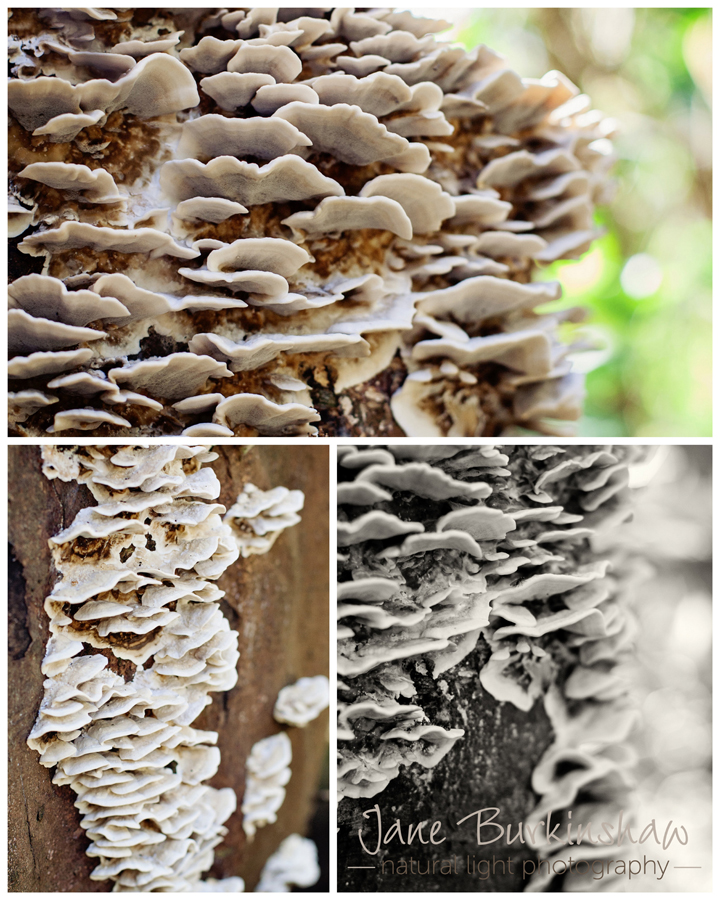 how-to-photograph-toadstools