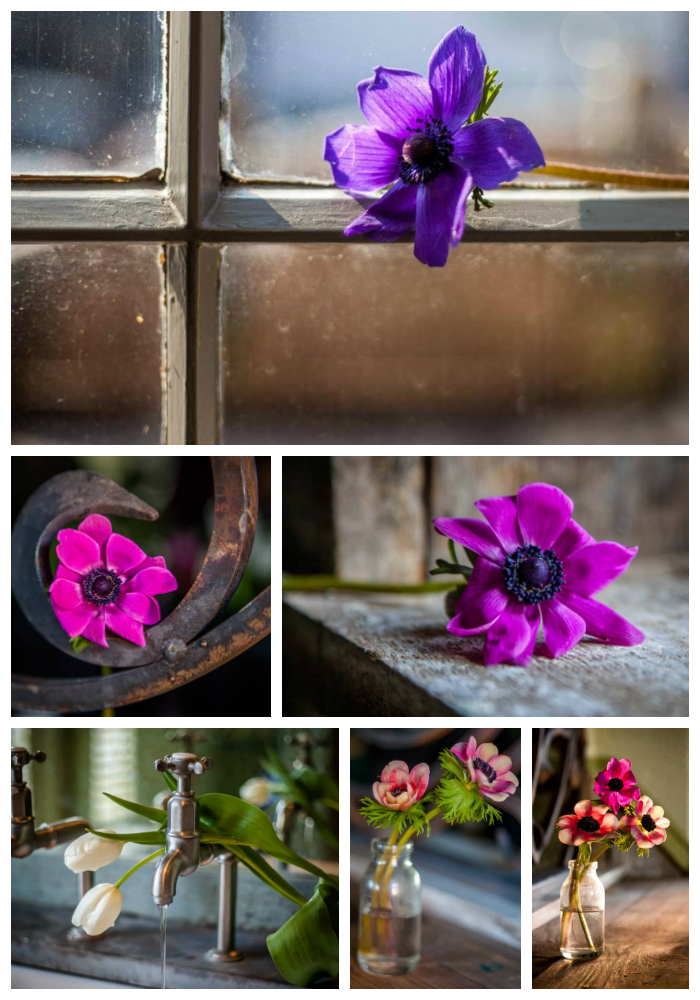 fine_art_flower_photography_cheshire